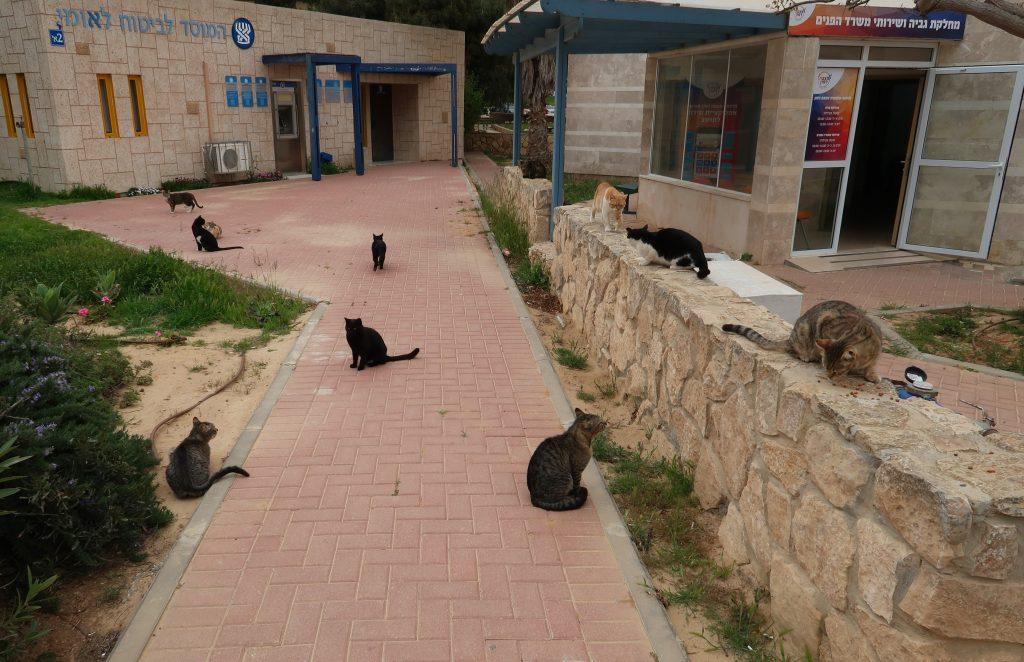 Kočičí gang v Mitzpe Ramon