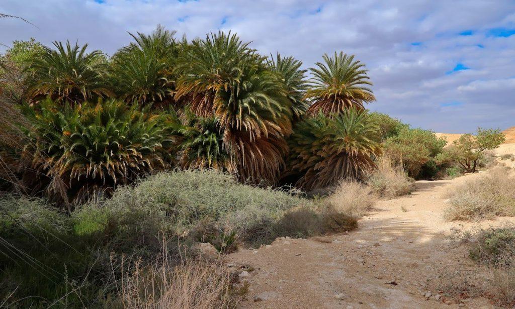 Oáza uprostřed pouště