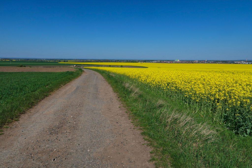 Poutní cesta Blaník Říp pole u Tatce
