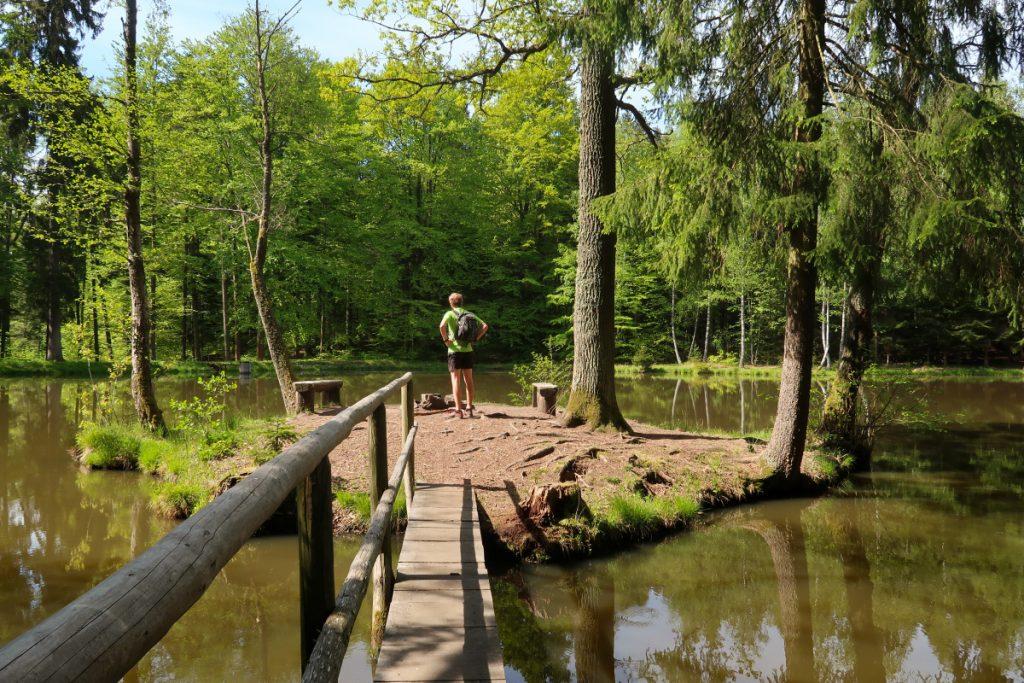 Písecké hory - rybník Němec